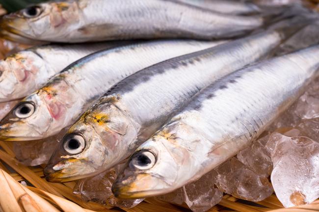 sardine_b